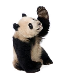 Google-Panda-Updates-sm